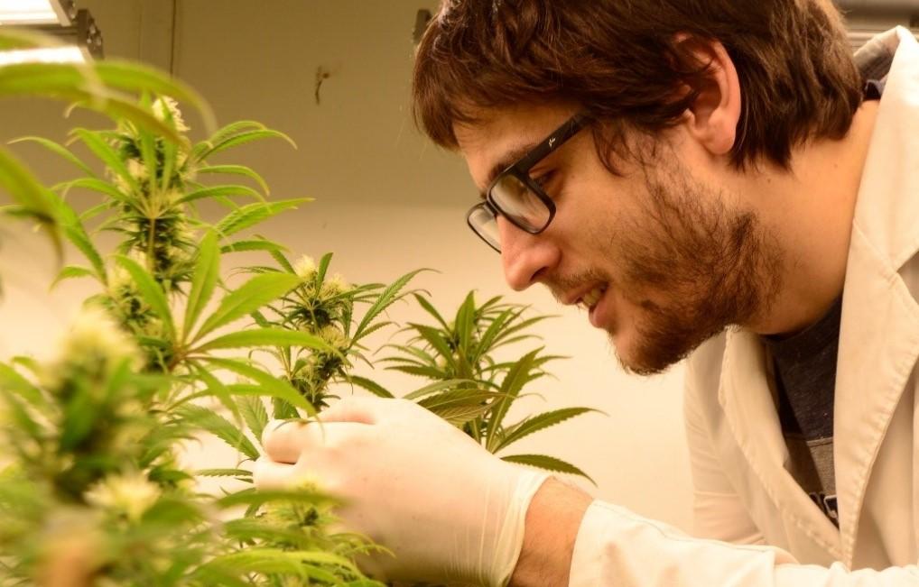 Read more about the article La ciencia del cannabis